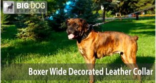 """Boxer Dog Walking – Exclusive Wide """"Crazy Combo"""" Collar"""