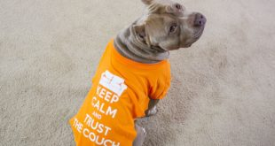 How to make a dog shirt out of a t shirt