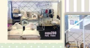 Luxury Dog Clothes and Accessories – Pampering Your Pets for Function and Fashion