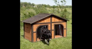 Merry Products Darker Stain Duplex Dog House with FREE Dog Doors, Wood, Extra Large