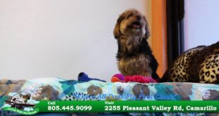 Camarillo Dog & Cat Boarding, Doggie Daycare and Grooming – (805) 445-9099 – Flying High Pet Resort